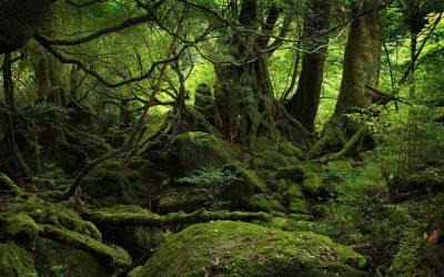 Final Destination:  Japan's Suicide Forest