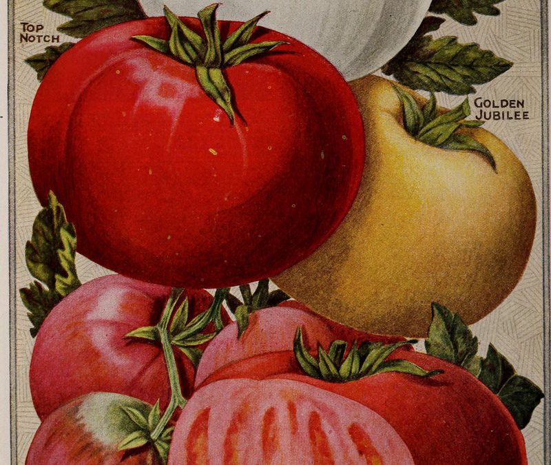 The Devil's Fruit (or Is It a Vegetable?) – Why People Have Feared Tomatoes for 600 Years