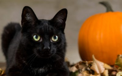 6 Ways to Make Halloween Safer for Your Pets